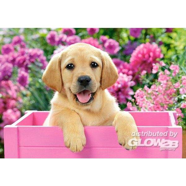 Labrador chiot dans la boîte rose Puzzle 500 pièces