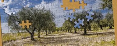 Puzzles nature